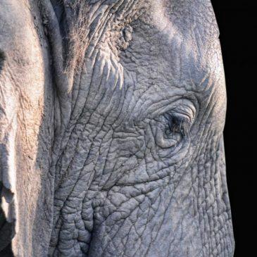 Bien-être animal : la douleur est complexe et parfois extrêmement profonde